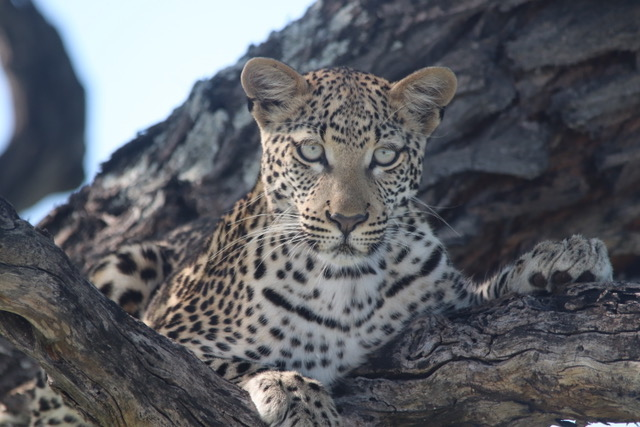 Etosha, Namibia tours and travel