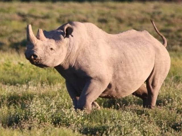 Etosha National Park, black rhino