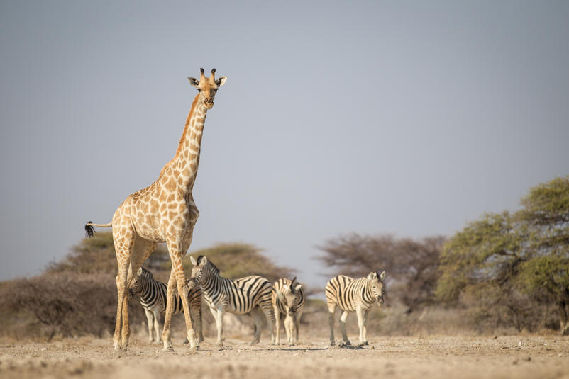 Etosha Magic - Wildlife coming to a waterhole