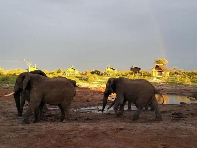 Elephant Sands Waterhole (Standard)