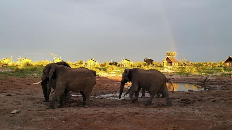 Family Self-Drive Botswana - Elephant Sands Waterhole (Standard)