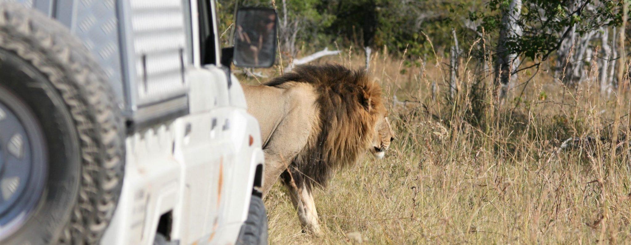 Bittern Botswana Self Drive itineraries