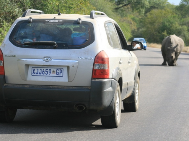 SUV's give you more luggage space and height when game viewing.