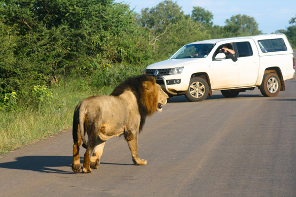 4x4 vehicles are great for game viewing in Kruger.