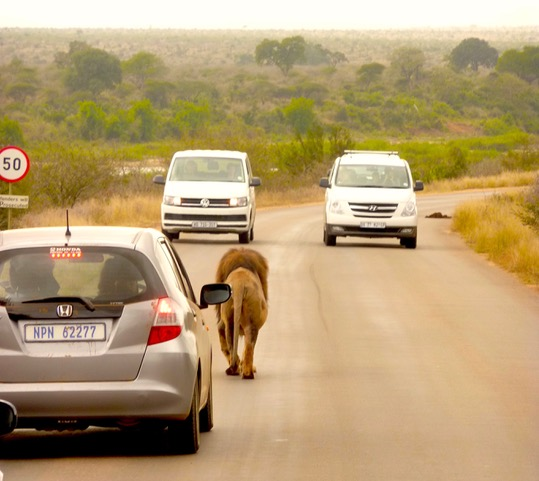 On a budget, then a small sedan vehicle is suitable for Kruger!