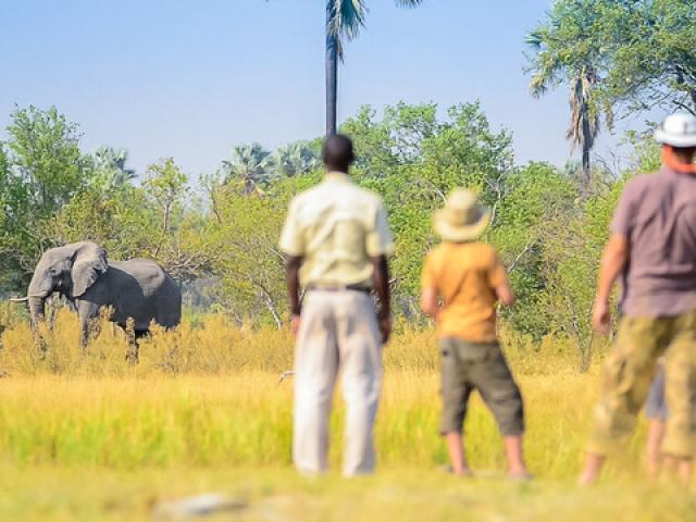 Delta Camp, Okavango Delta Family Tour, safari walks