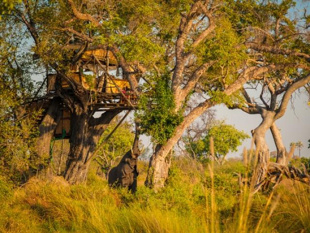 Delta Camp, Treehouse visitor, Okavango Delta Family Tour,