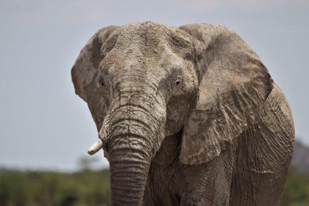 Etosha elephants, Namibia Family holiday