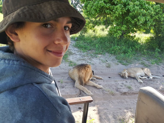 Lion sighting on game drive along the Chobe River!