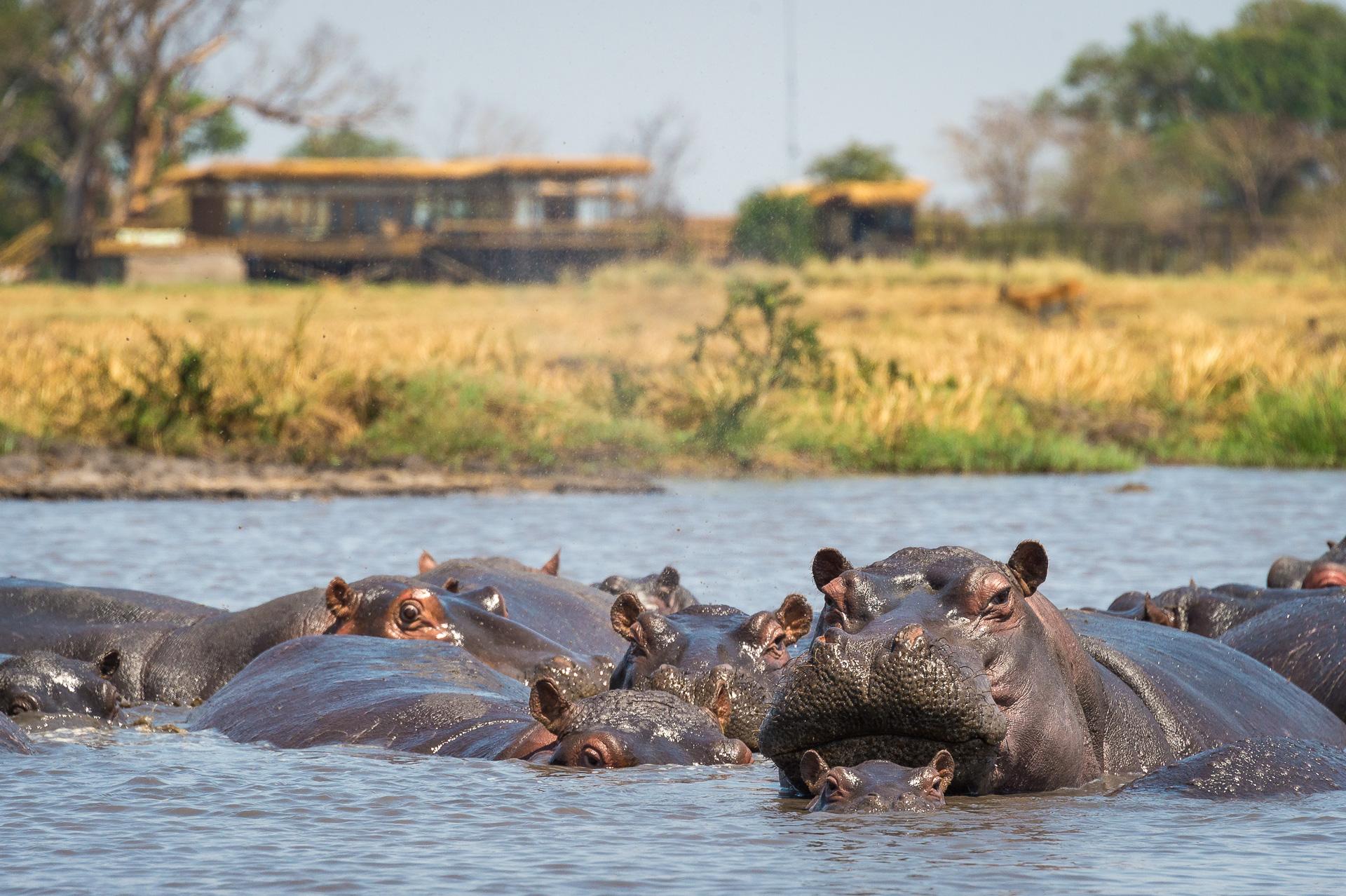 Visit Zambia, Kafue