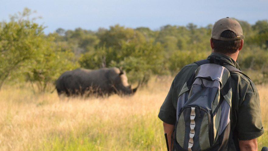 Kruger On Foot Walking Safaris