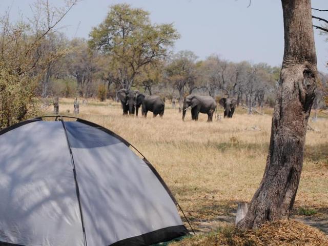 Mbudi Campsite, Khwai Community Trust, view wildlife from your campsite!